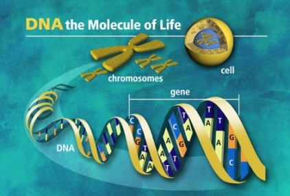 DNA Update: DNA Recoding now Scientifically Proven