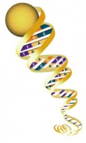 ENGINEERS 'PROGRAM' DNA MOLECULES
