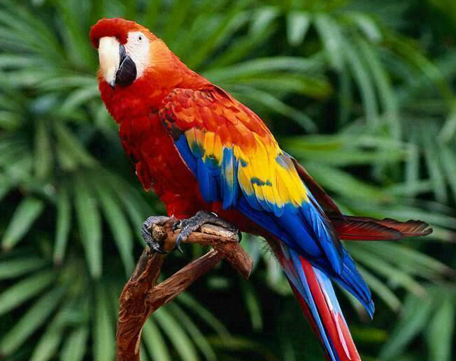 Psychic' parrot expected to ruffle scientific feathers