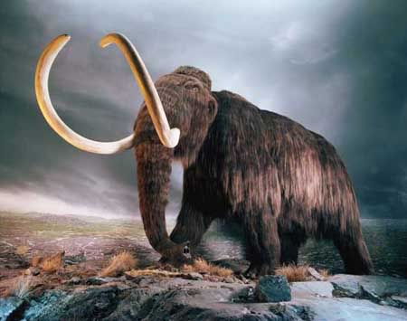 Image of the Day: 30,000 Year Old Woolly Mammoth Discovered in Russian Tundra
