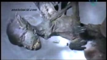 Video: Demonic Fairy Captured, Biologist Says Creature Has Humanoid Body And Four Wings