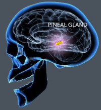 Pineal Gland's Third Eye: The Biggest Cover-up in Human History