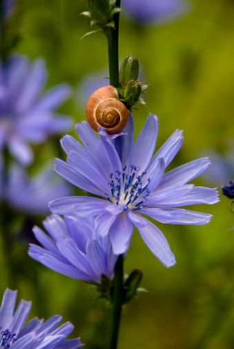 The Secret LifeParticles of Plants: When Life is Galling Chicory Helps The Bitter Get Better