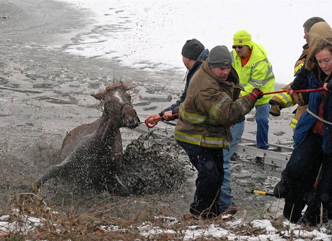 Horse rescued after it fell through the ice