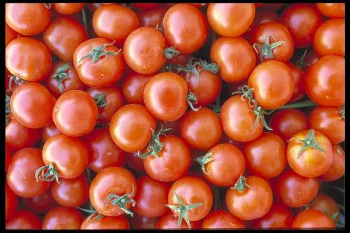 Mercola's Organic Tomatoes, While Smaller, are More Nutritious than Conventional Counterpart, Study Shows
