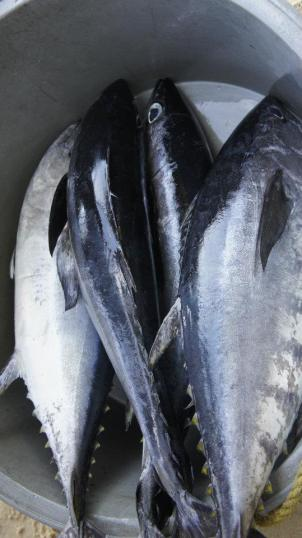 Shocking Report Identifies Massive Seafood Fraud Across the US