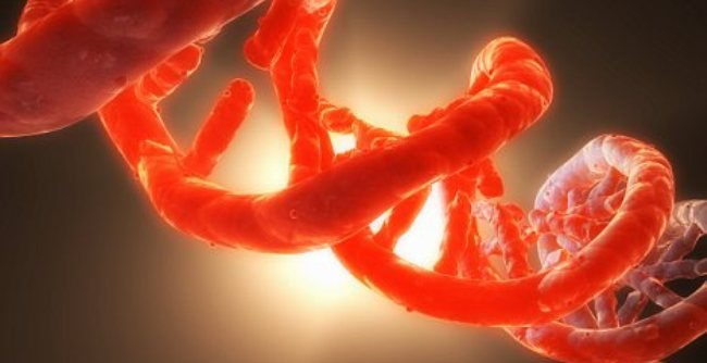 Scientists Finally Admit There Is a Second, Secret DNA Code Which Controls Genes