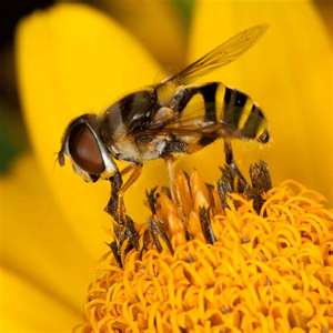 Robotic Bees to Pollinate Monsanto Crops