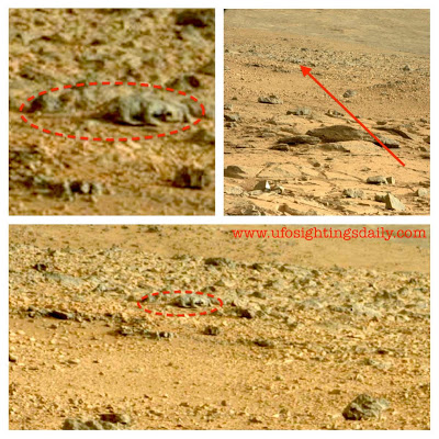 Is that a lizard on Mars – why is NASA silent?