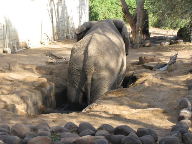 Namibia Volunteers Rescue an Elephant After She Was Trapped for 11 Hours or More…