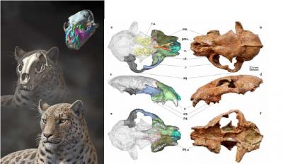 Fossil Of New Big Cat Species Discovered; Oldest Ever Found