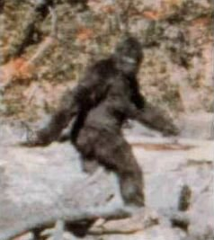 Sasquatch Video from 1994 In Washington