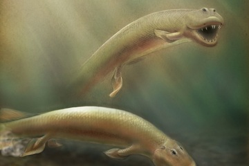 Strange Ancient Fish Had Front And Back Legs