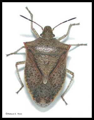 What do Stink Bugs and Archons Have in Common?