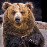 VICTORY!!! Judge Halts Plan to Eliminate Secure Grizzly Bear Habitat in Northwest Montana
