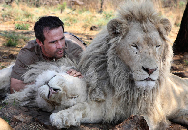 Lions – The New Endangered Species