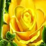 Ed's Big Freak out & More (Yellow Rose for Texas)