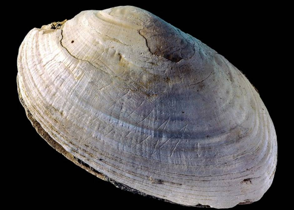 500,000-year-old shell engraved by Homo erectus challenges previous beliefs about human ancestors