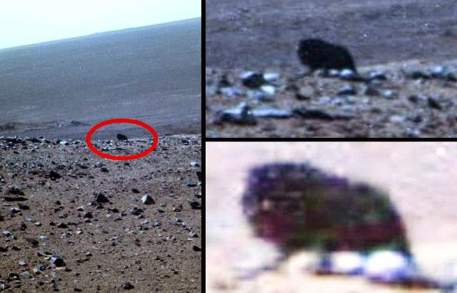 Possible Four-Legged Dark Creature Caught On Camera By Opportunity Mars Rover.. Alien Tatanka? (Photographs)