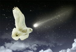 snowy_owl_and_shooting_star-td