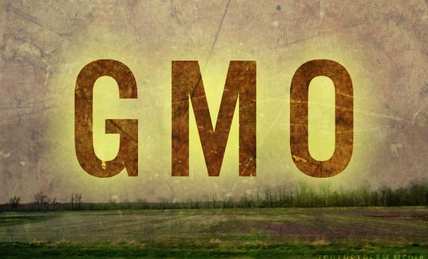 GM Crops in India: Approval by Contamination?