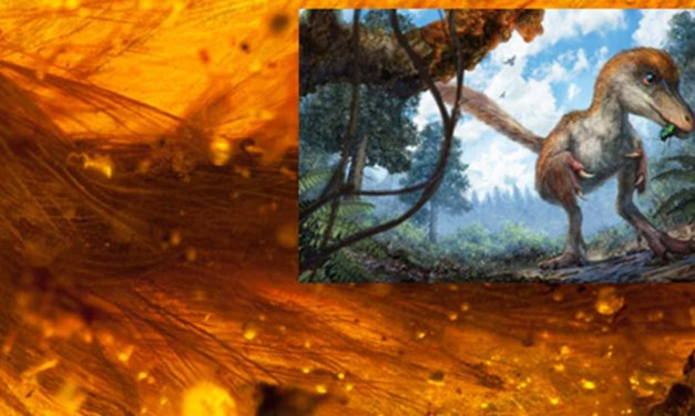 World First as Feathered Dinosaur Tail is Found Preserved in Amber