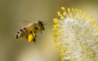 Why the Honey Bee was Sacred to Ancient Civilizations [VIDEO]