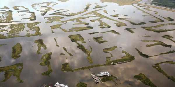 Petition – Hold the Oil and Gas Industry Accountable for the Damage That They Caused to Louisiana Coastal Wetlands