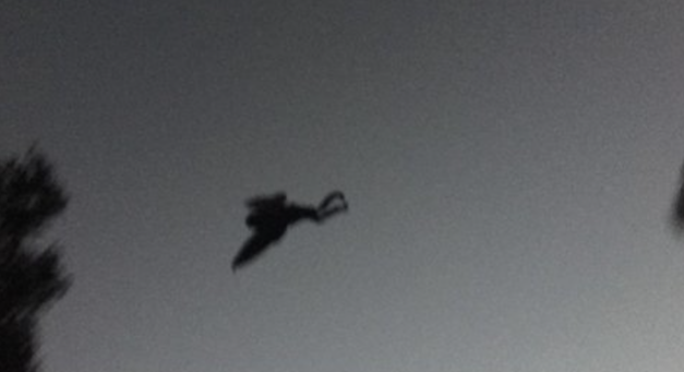 The return of Mothman?