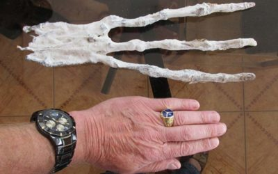 Bizarre 3-Fingered Mummified Hand Found in A Tunnel in the Peruvian Desert
