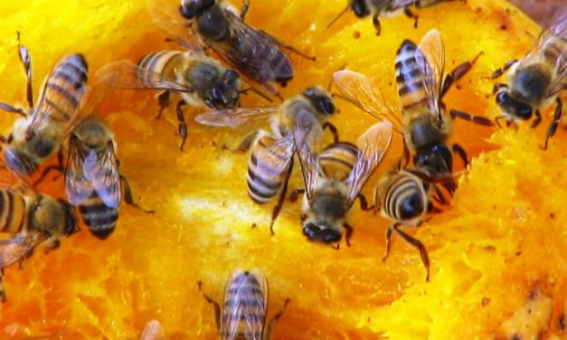 Pesticides kill over ten million bees in Brazil's countryside