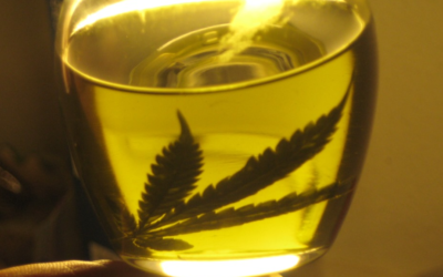 Doctors Speak Out On The Benefits Of CBD (Cannabidiol) [VIDEO]