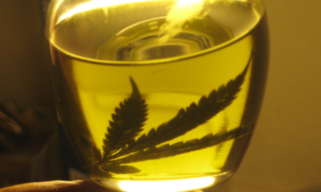 Boy with epilepsy finds 'normal life' with cannabis oil