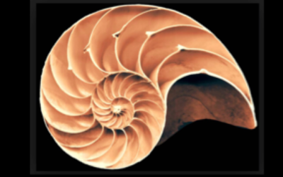 Golden Ratio and Esoteric Anatomy: The Body as Consciousness