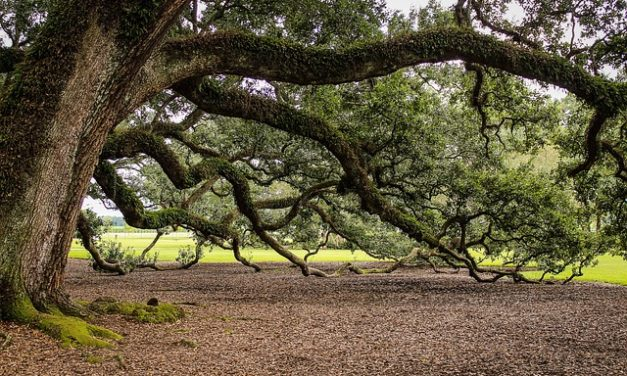 Testimonial- ' I grounded myself next to a huge oak tree' from Gary