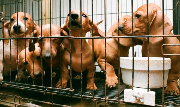 Bill Introduced to Restore Animal Welfare Transparency