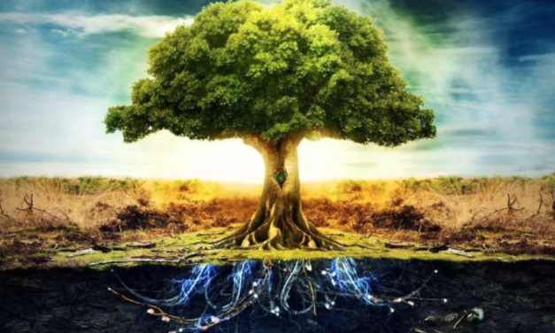 CELTIC DRUID ASTROLOGY: WHAT'S YOUR TREE ZODIAC SIGN?