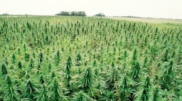 Perfect Plant? 7 Great Uses For Industrial Hemp