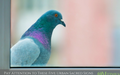 PAY ATTENTION TO THESE FIVE URBAN SACRED SIGNS