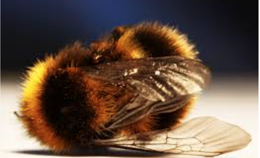 Vital Insects For All Life are Dying Out: 80% Population Decline in Nature Reserves