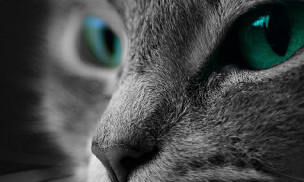 Can Cat Poop Make You Crazy? The Possible Correlation Between Toxoplasmosis and Schizophrenia