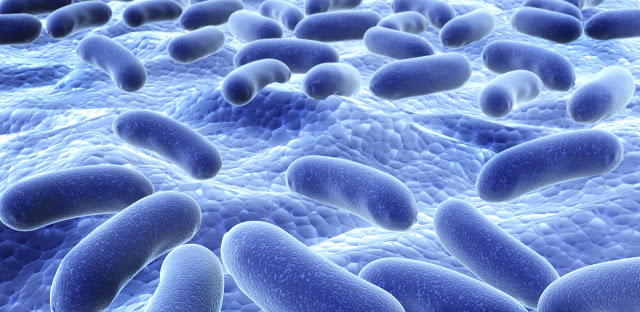 Probiotics Provide Anti-Cancer Effect