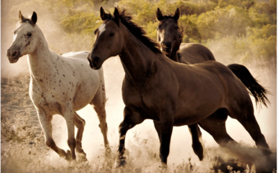 US Government Gearing Up To Slaughter 90,000 Wild Horses