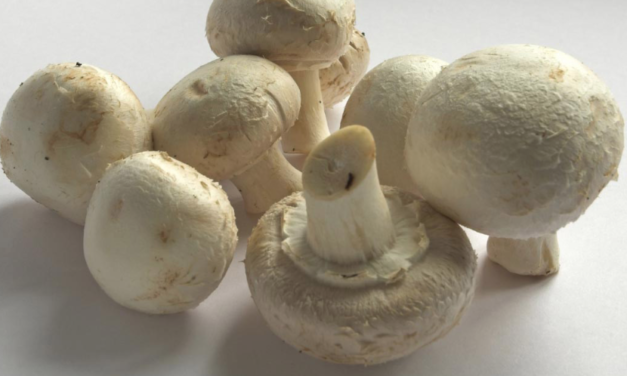 Eating mushrooms every day fights chronic disease // 7 Mushrooms to Live Longer