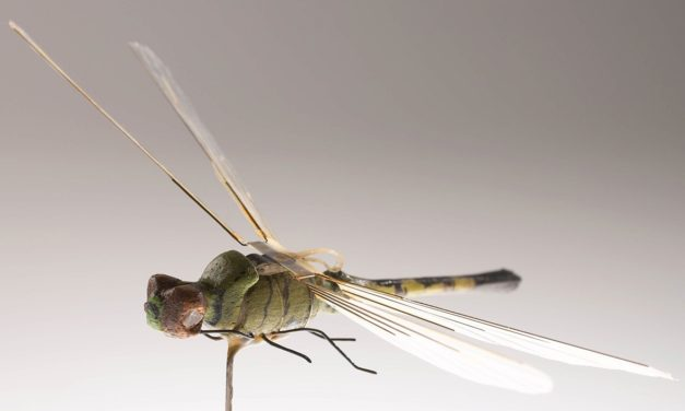 Check Your Insects: Insect Drones Have Existed Since The 1970s