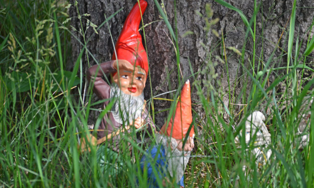 "Attempted Abduction by ""Gnomes"""