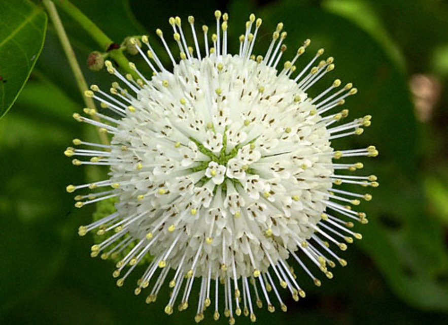 Mysterious Unknown Plants and Magical Powers and Properties