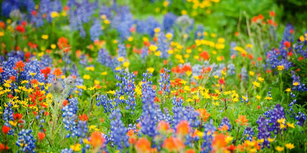 Wildflowers Are the Best Pesticide