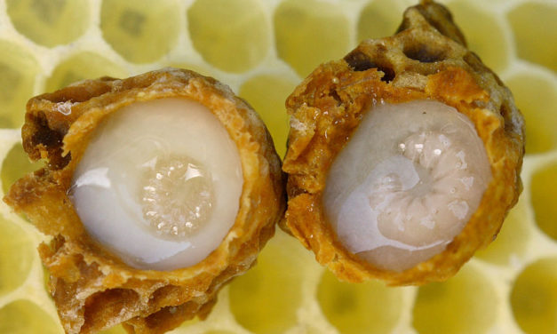 Royal Jelly: Anti-Diabetic Healing Gift from the Bee Hive