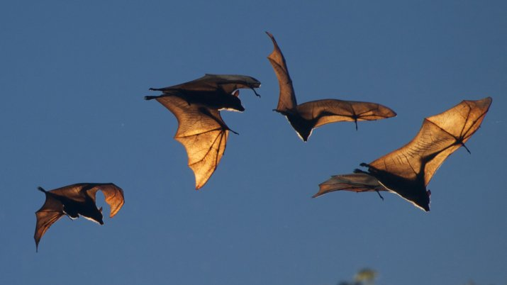 Study Finds That Humans Can Use Echolocation Just Like Bats